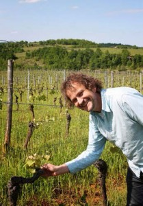Phillipe showing a vine stem in a vineyard